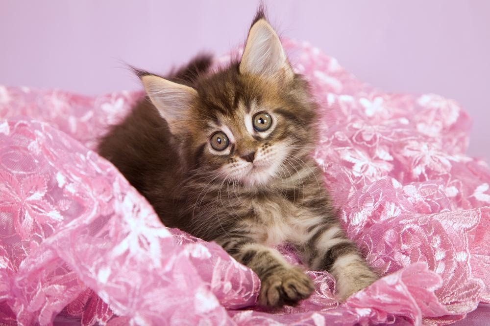Как отучить котенка царапаться :: Уход и воспитание :: KakProsto ...