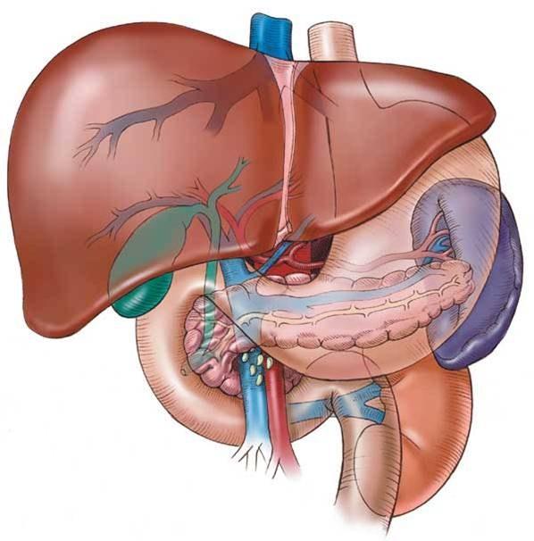 Как избавиться от резкой боли в печени 🚩 боль печени лечение ...