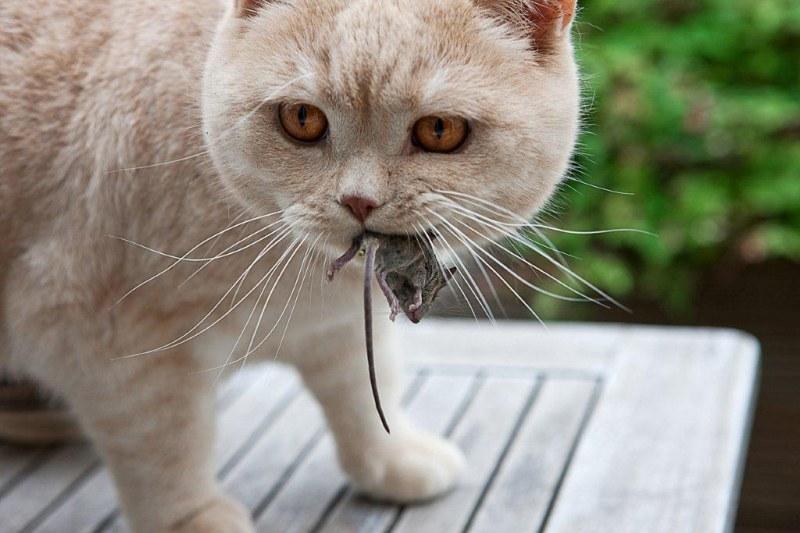 Дача мыши кот