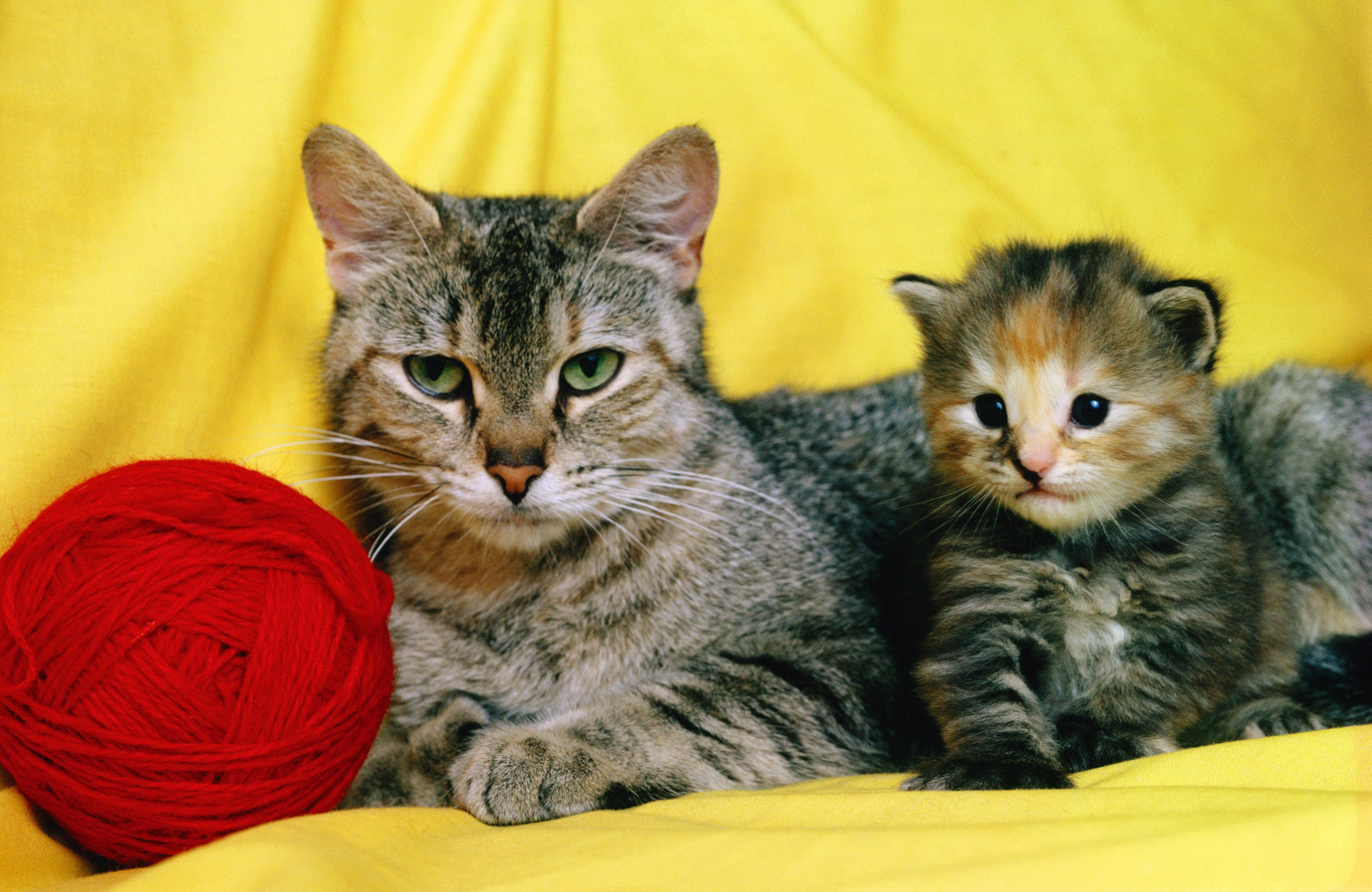 Как сбить температуру в домашних условиях у кота