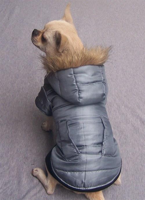 Как сшить куртку собаки