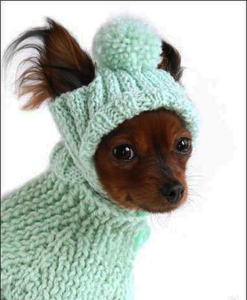 Как связать шапку собаке