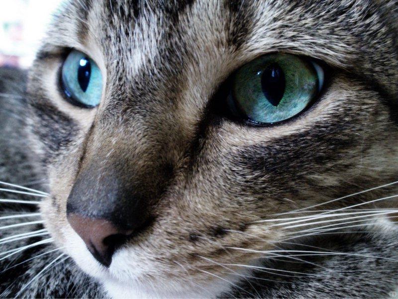 Как определить и вылечить лишай стригущий у кошек