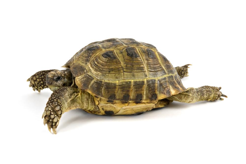 Как сделать черепахе домик фото 444