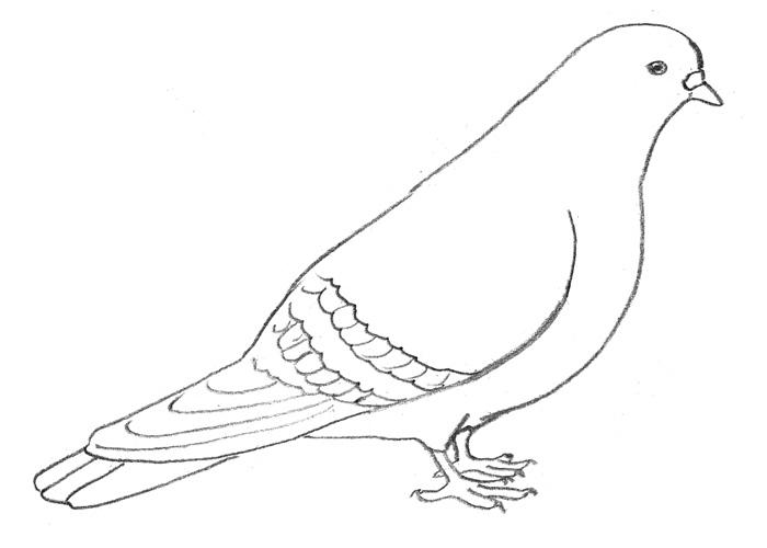 Рисунок голубя готов.