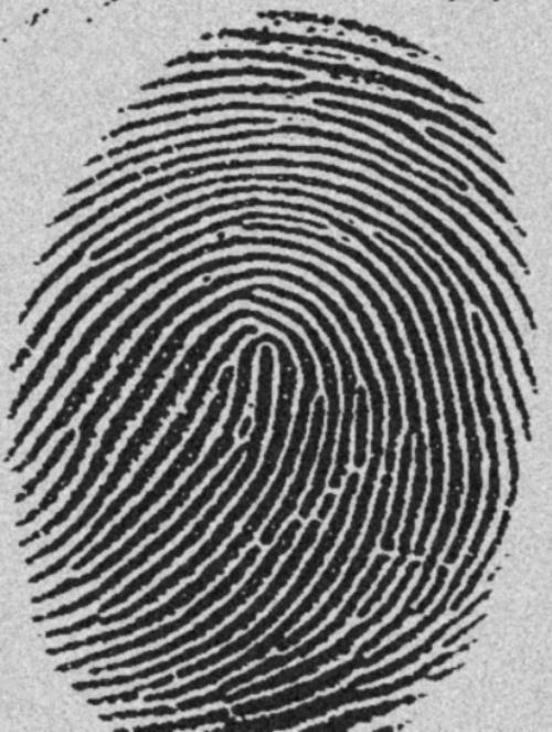 картинки отпечатки пальцев