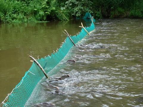 Как ставить сети на реке 🚩 как поставить рыболовную дорожку ...