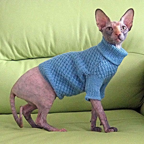 Как связать для кота одежду