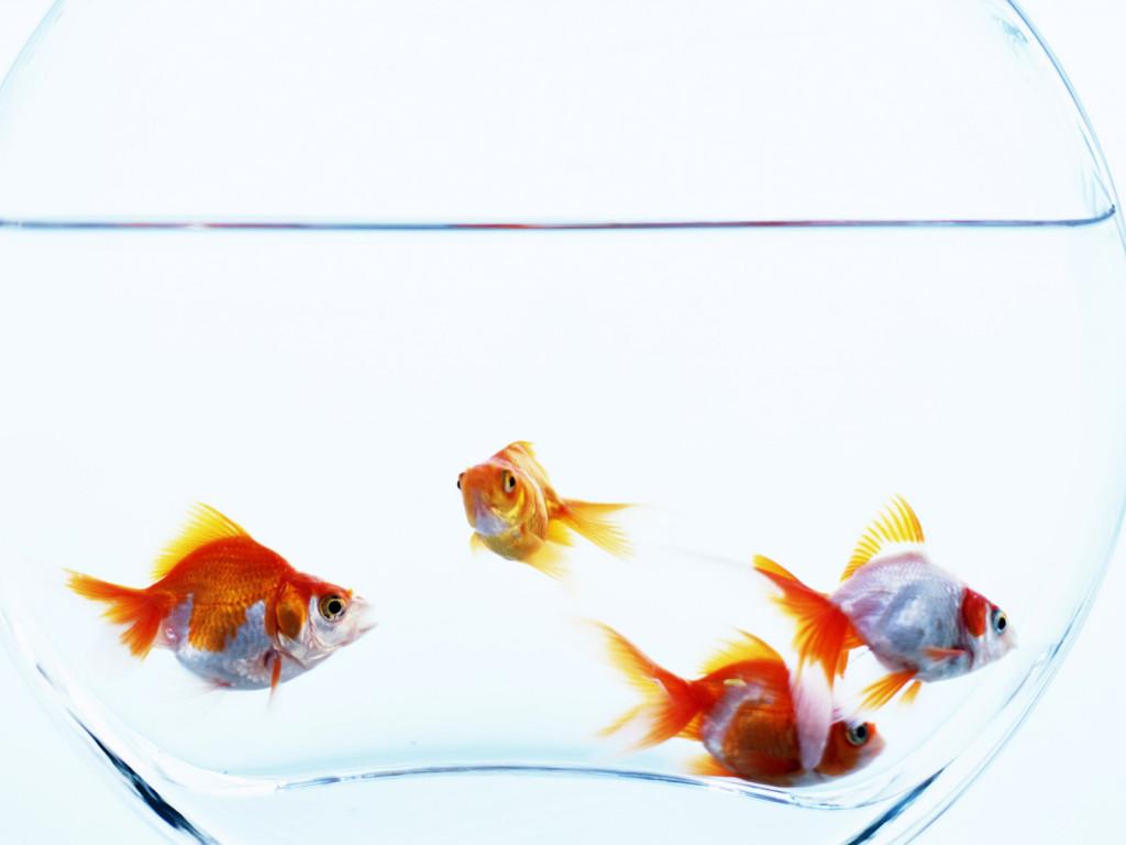 Как сделать воду в аквариуме чистой