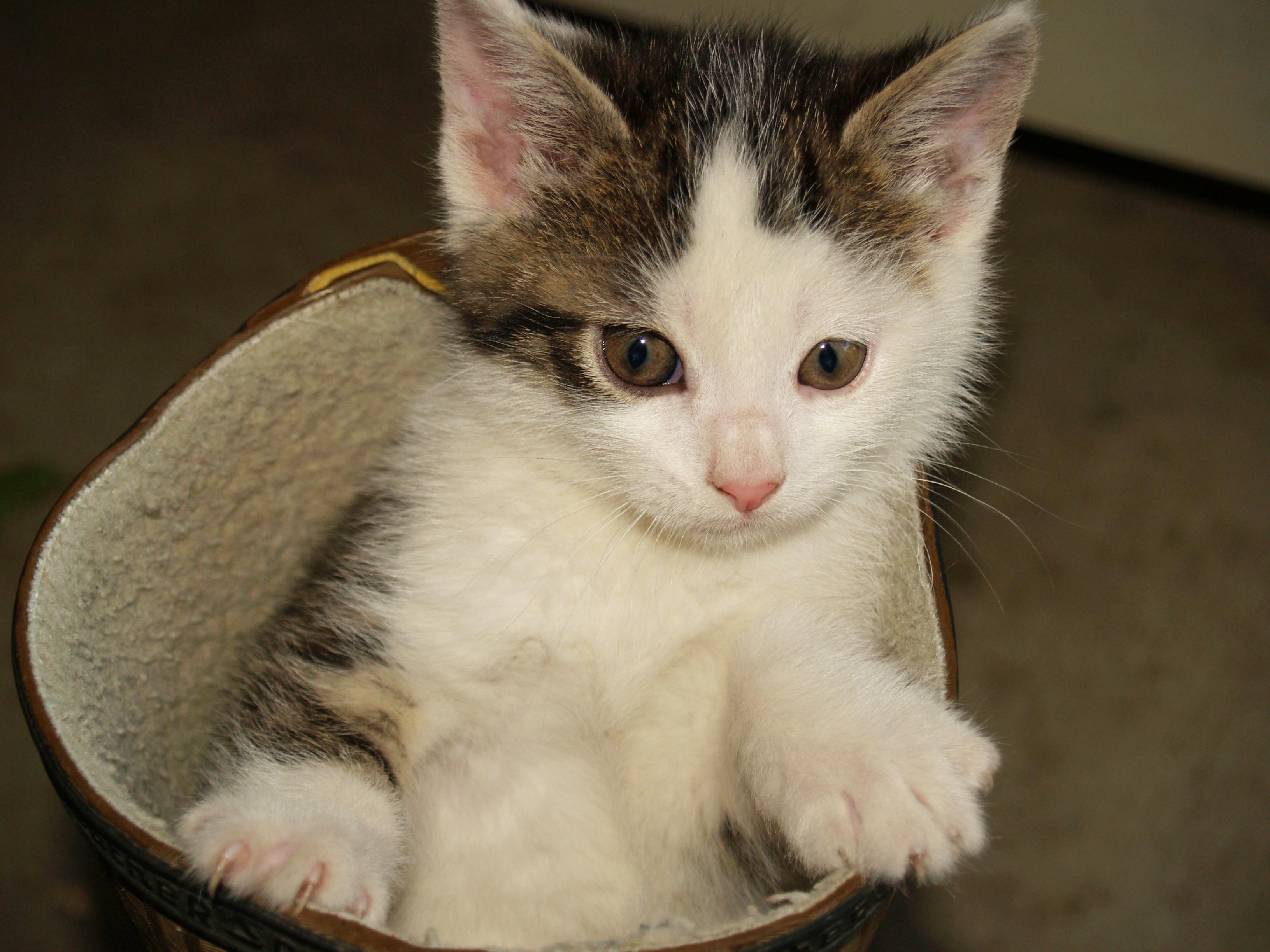 Намять кота