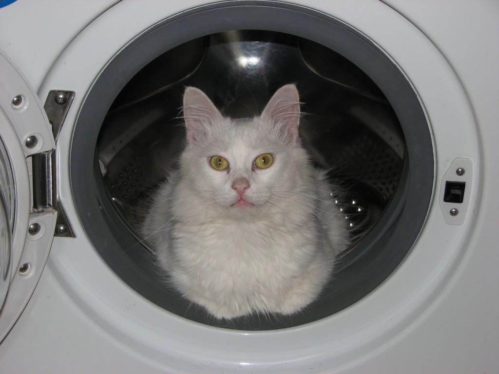 Шампунь коту от перхоти