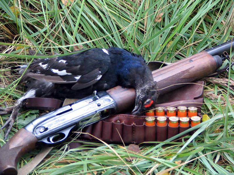 Заявление на замену охотничьего билета