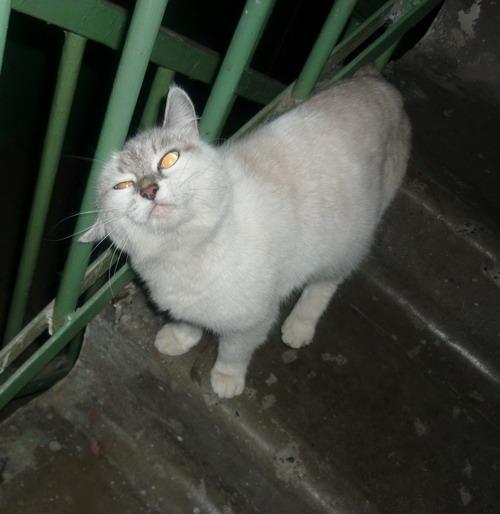 Избавиться от котов в подъезде