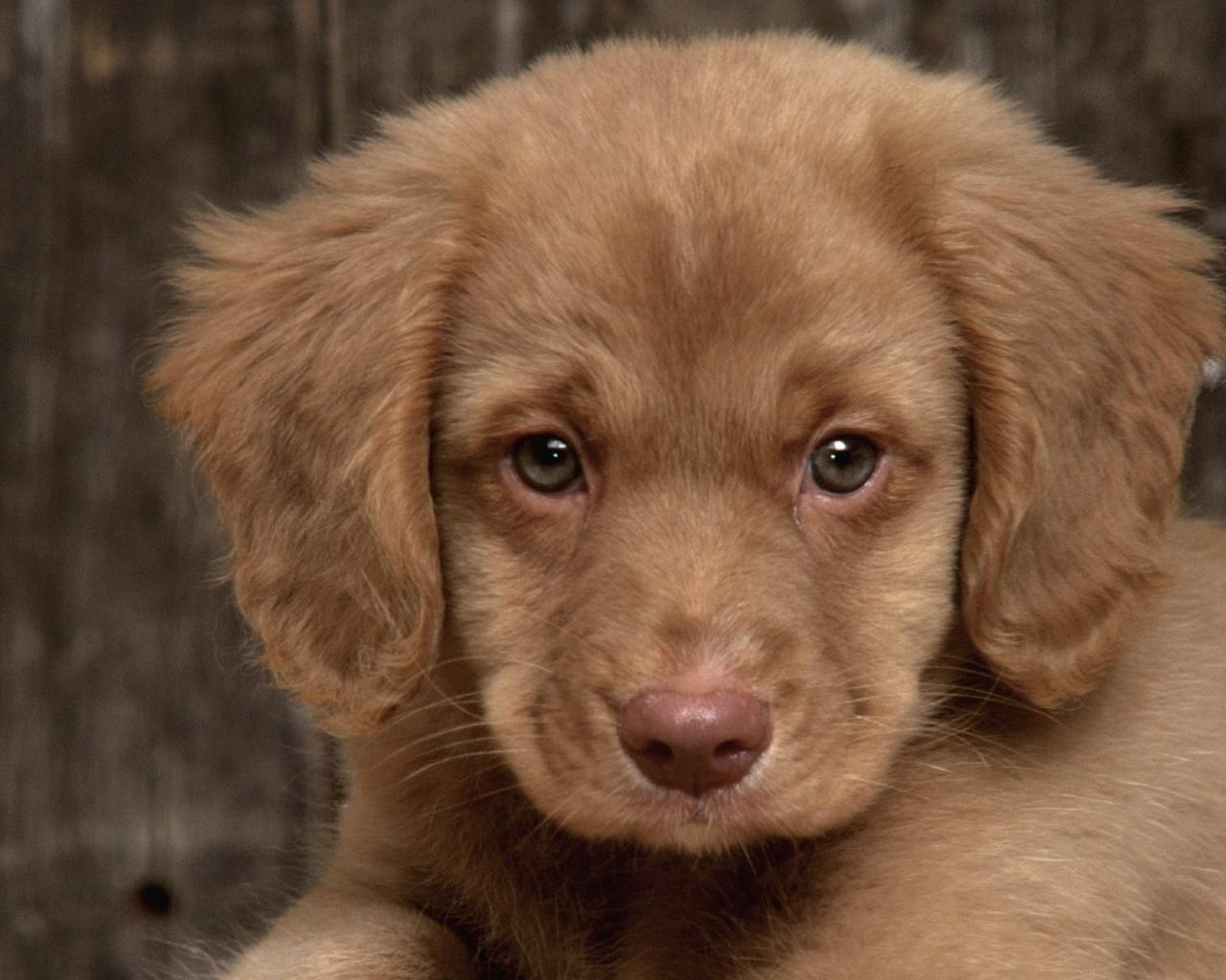 Выбор щенка радостное и очень важное событие