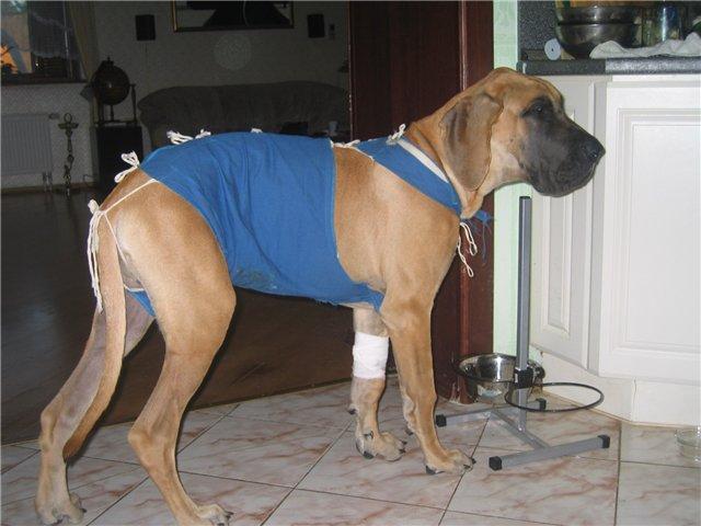 операция мастит у собаки