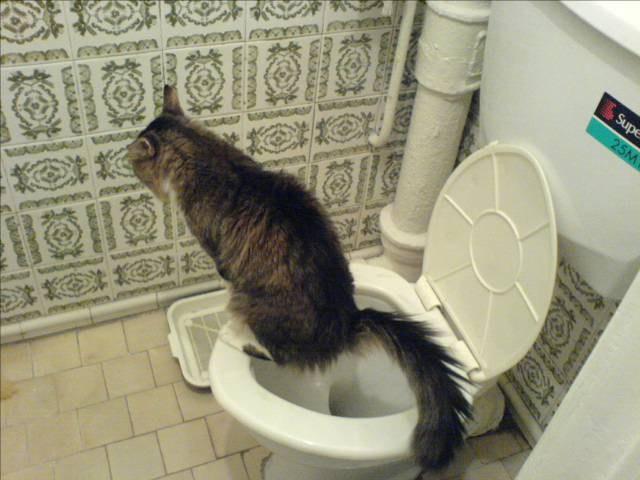 Как отвадить кота от места