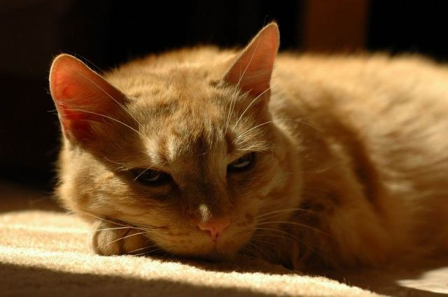 Беременность у кошек сколько длится и как проходит