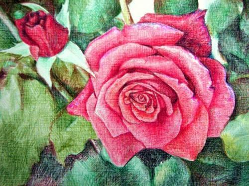 Как нарисовать розу поэтапно для начинающих красками