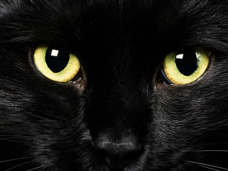 Определить кот болеет