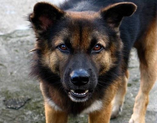 Что сниться значит укус собаки если