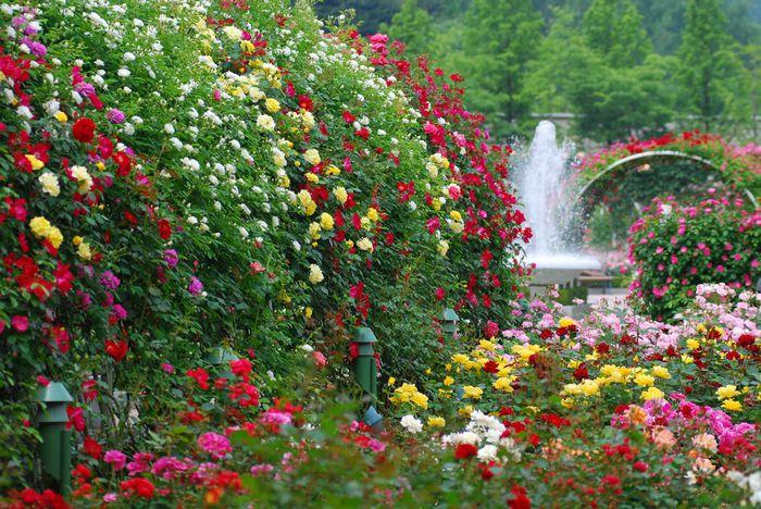 Картинки по запросу сад цветы