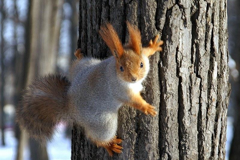 Картинки фото животных зимой