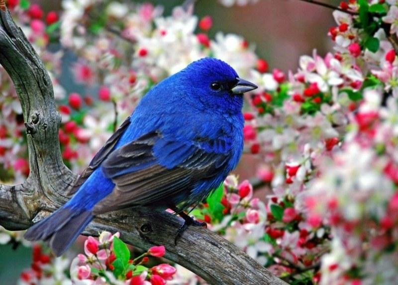 птицы снятся к чему природе на