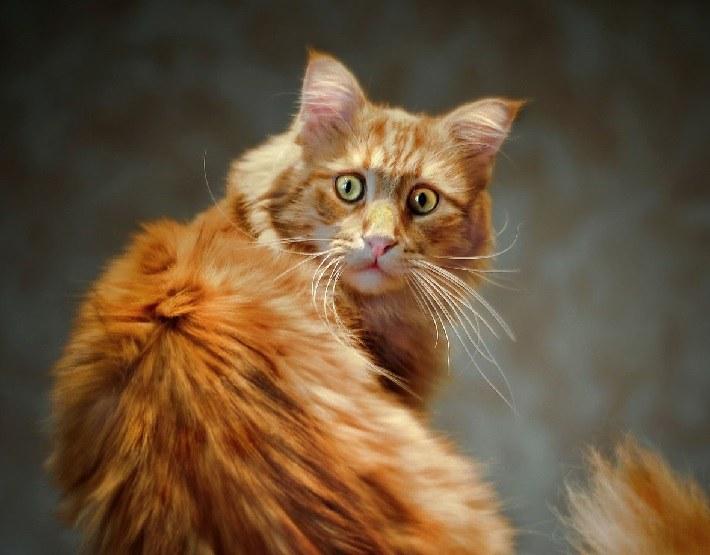 Что делать если у кота испуг