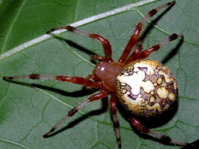 Отличие пауков от насекомых