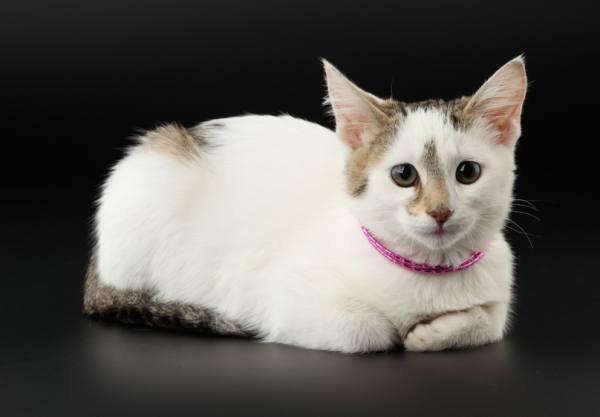 Через какое время можно стерилизовать кошку после окота