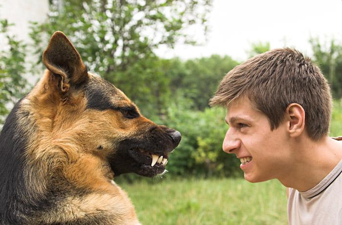Картинки по запросу Как подружиться с собакой?