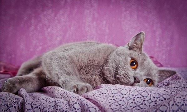 Какой характер у кота