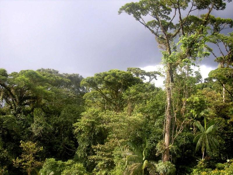 Какие есть животные влажных экваториальных лесов 🚩 влажные экваториальные леса животные 🚩 Животные 🚩 Другое