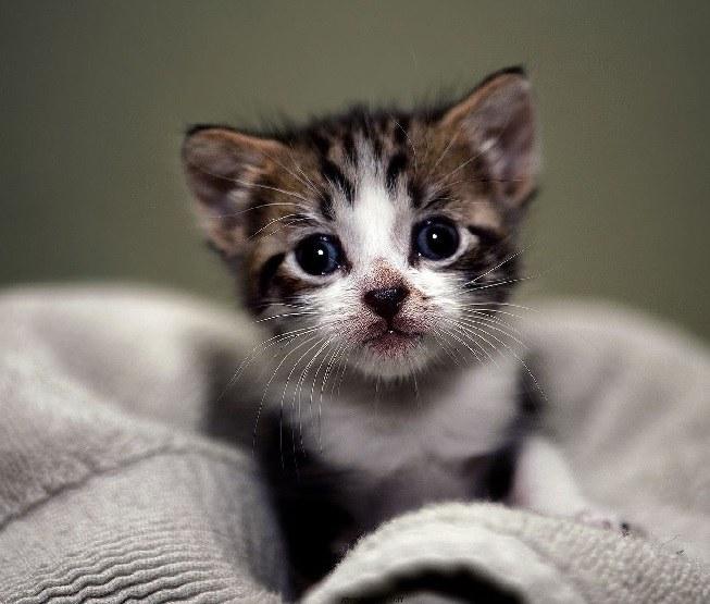 Чем кормить кота в 1 месяц