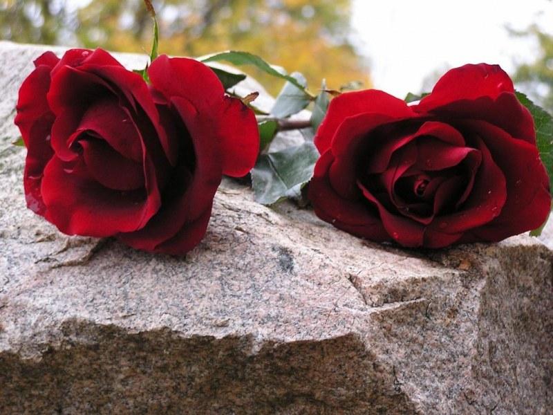 Можно ли на могилу класть живые цветы