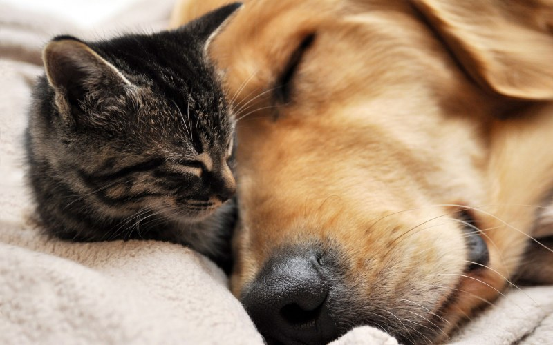 Image result for кошки любят собак