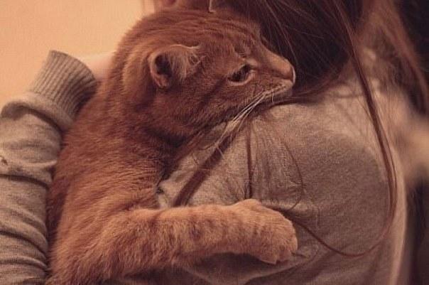 Если внезапно умирает кот