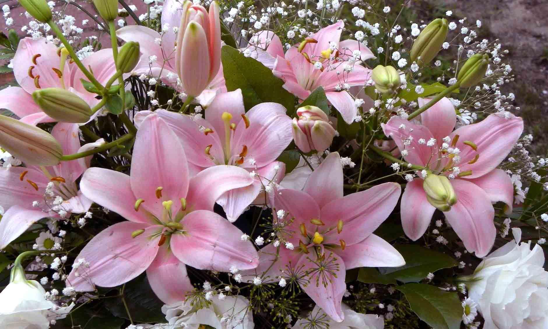 Лилии букеты фото цветов