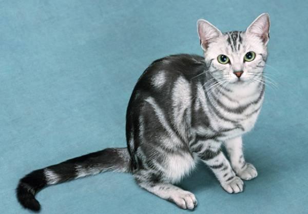 Уход за кастрированным котом