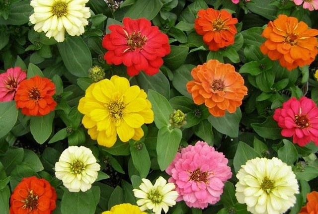 Цветущие в июле цветы
