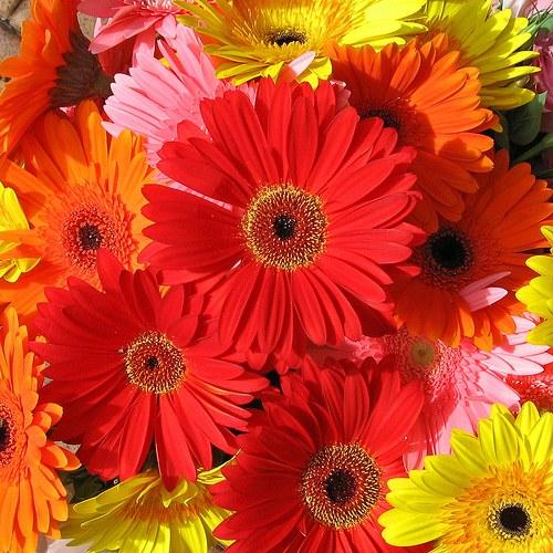 Какие цветы любят женщины.