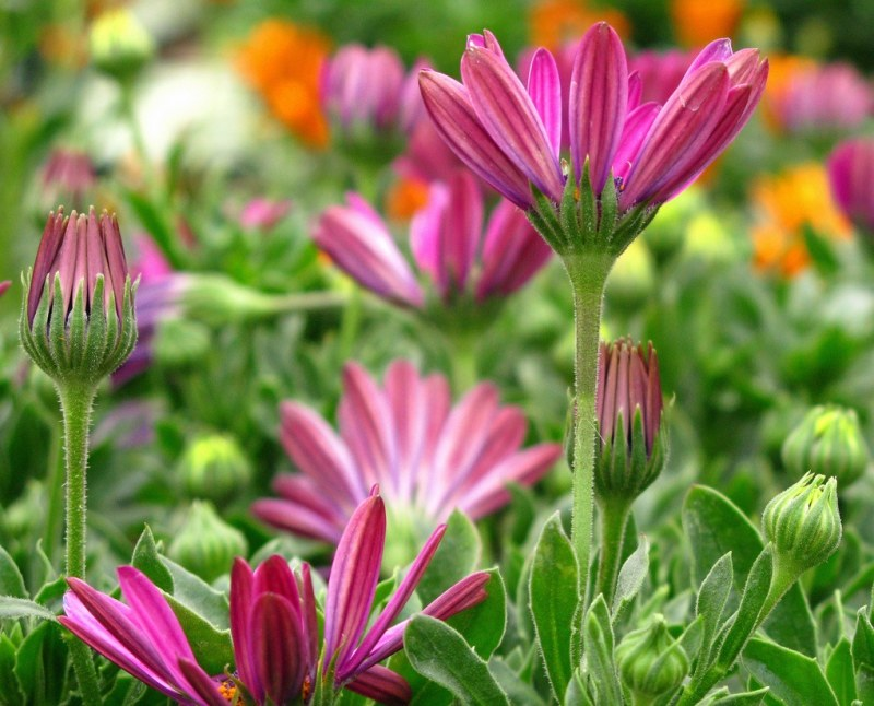 Какие цветы можно садить в августе под зиму