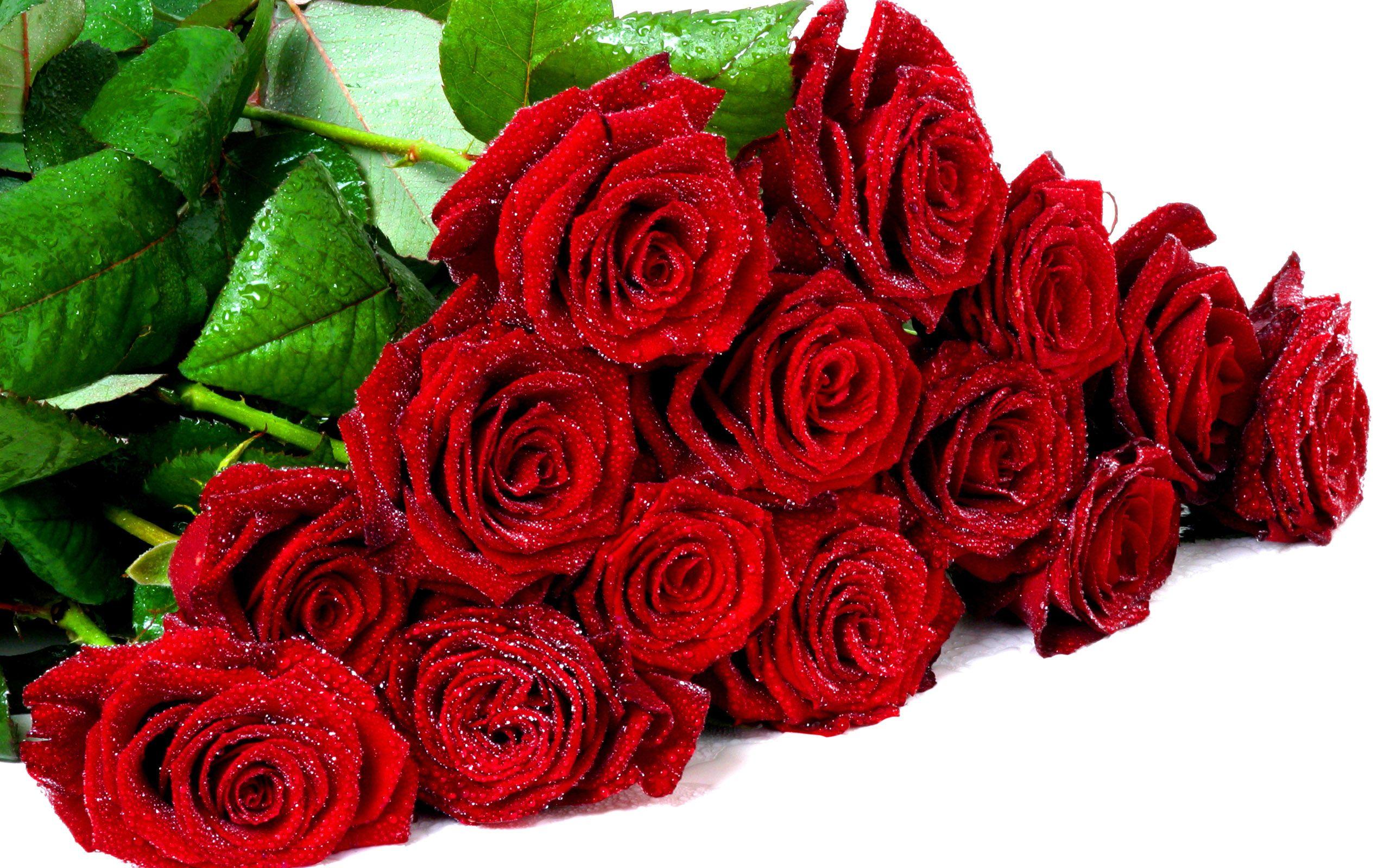 Цветы красные розы