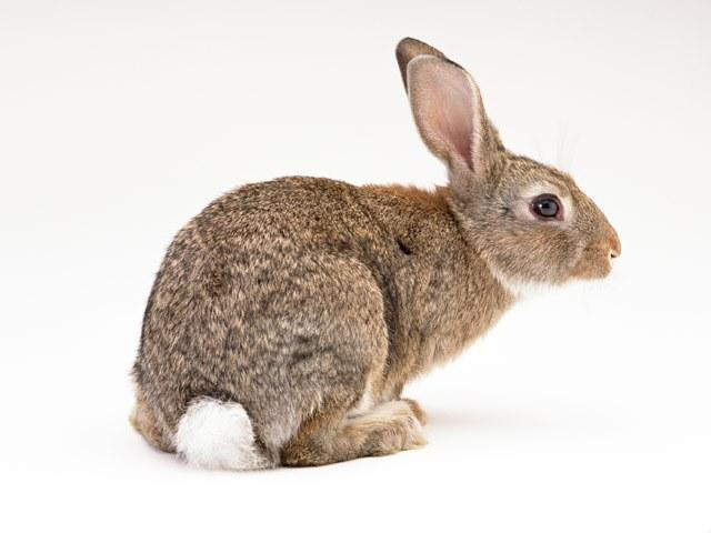 Как приготовить фальшивого зайца