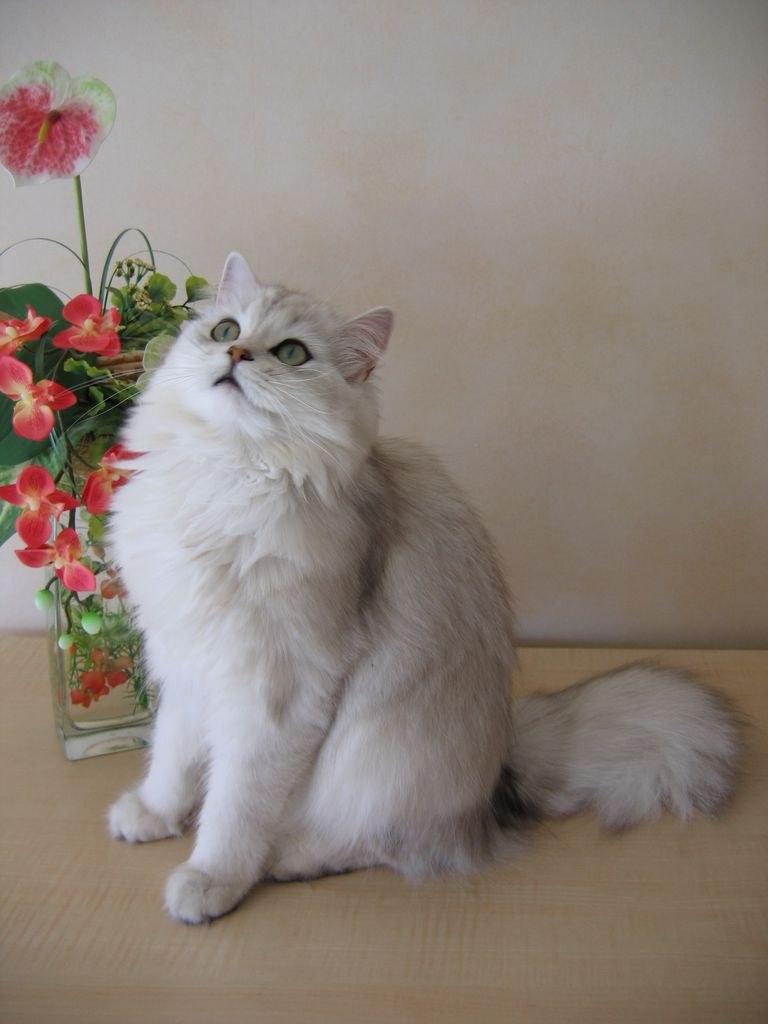 ужасный запах изо рта у кота