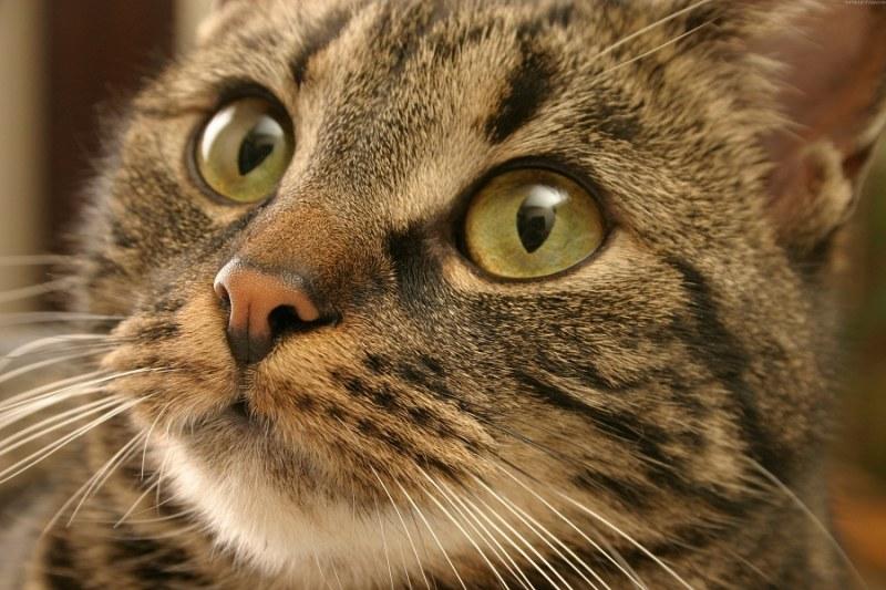 аллергия на котов симптомы лечение