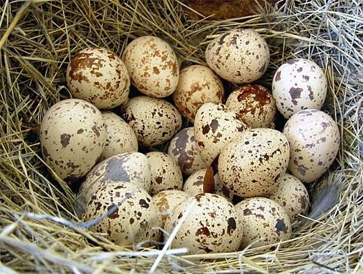 чем полезна яйцо