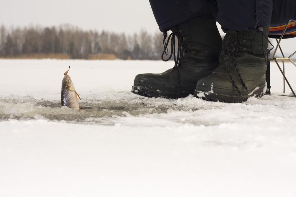 где клюет рыба в курганской области