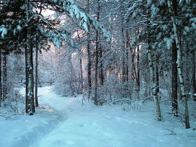 Фотки зимой в лесу