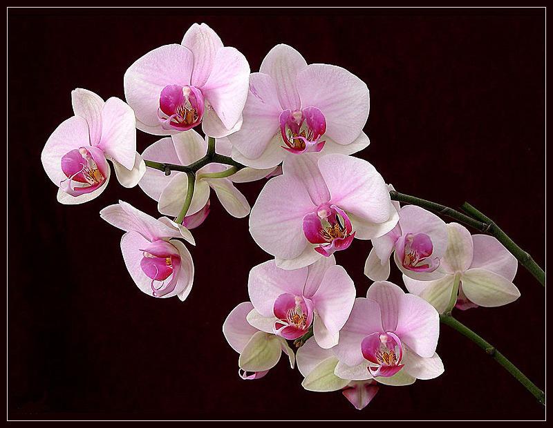 спасибо открытки орхидеи требования фотографии паспорт
